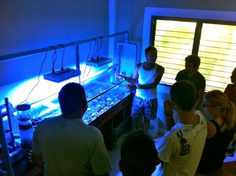 Koh Tao conservation program