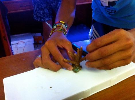 Fragging coral workshop